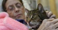 Este hospital permite que los enfermos reciban visitas de sus mascotas