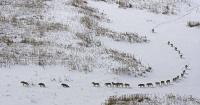 ¿Por qué todos están hablando de esta foto de una manada de lobos?