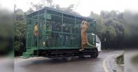 El zoológico que encierra a la gente en jaulas para que alimenten a los tigres