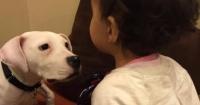 VIDEO: Este perro sonríe cuando posa para las fotos. Sí. Sonríe.