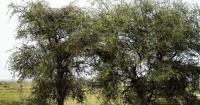 ¿Puedes ver el leopardo escondido en la foto? El desafío que los niños resuelven en 1 minuto