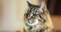 El gato más anciano del mundo tiene 121 años y es una estrella de internet