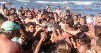 Un bebé delfín murió en una playa porque turistas lo sacaron del agua para tomarse selfies