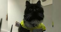 Este gato trabaja en una estación de trenes y acaba de ser ascendido