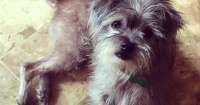 Nadie quería adoptar a este perrito, sin embargo este famoso actor de Hollywood le cambió la vida