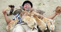 Okunoshima, la sorprendente isla donde viven miles de conejos