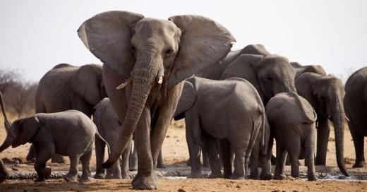 portada-elefanteabuela