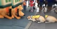 Esto ocurre cuando un perro conoce a Pluto