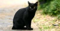 ¿Por qué los gatos negros se relacionan con la mala suerte?