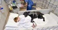 Mahe: El perro que cuida a un niño autista en el hospital