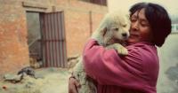 Cientos de perritos iban a ser servidos como comida en un festival en China y ella decidió evitarlo