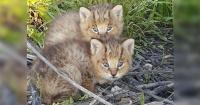 Les salvó la vida porque creía que eran inofensivos gatitos pero se llevó una gran sorpresa