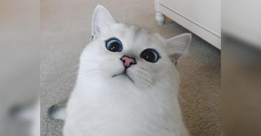 portada-gatoojos-1