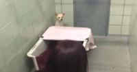 La conmovedora reacción de una perrita al reencontrarse con sus cachorros perdidos