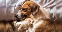 Con esto se acaba la discusión: ¿Qué es mejor, tener perros o tener gatos?