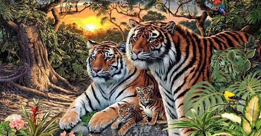 portada-tigres