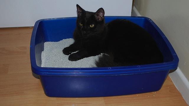 Gato acostado dentro de la caja con arena
