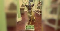 Estas 25 mascotas tuvieron una fiesta de cumpleaños mejor que la tuya