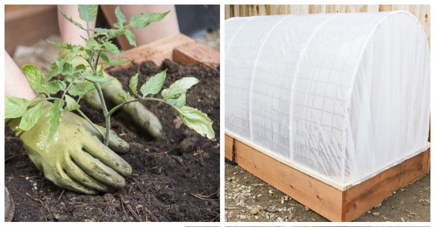 En s lo 9 simples pasos puedes crear tu propio invernadero - Invernadero para casa ...