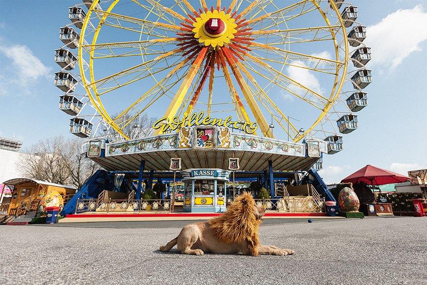 perro-abandonado-leC3B3n-de-la-ciudad-grossstadtlowe-julia-marie-werner-10