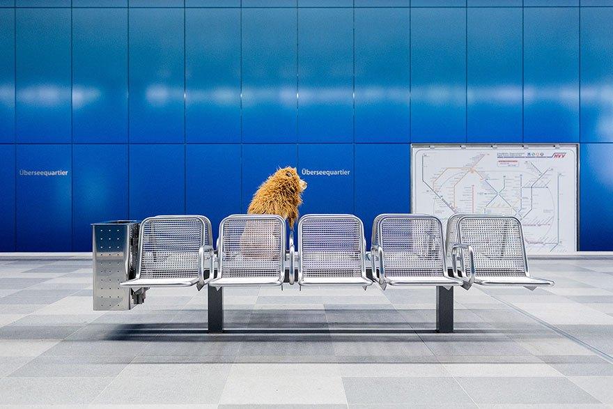 perro-abandonado-leC3B3n-de-la-ciudad-grossstadtlowe-julia-marie-werner-11