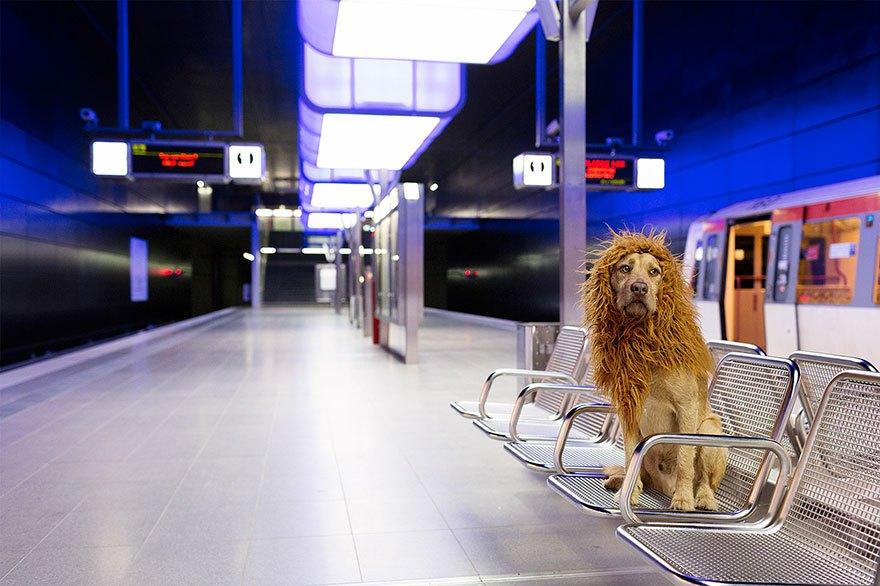 perro-abandonado-leC3B3n-de-la-ciudad-grossstadtlowe-julia-marie-werner-12