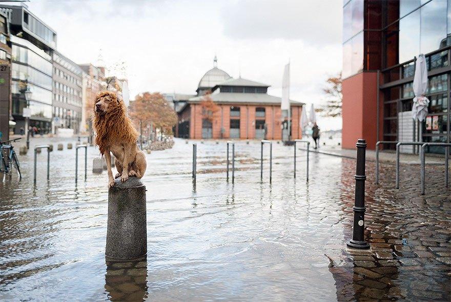 perro-abandonado-leC3B3n-de-la-ciudad-grossstadtlowe-julia-marie-werner-17