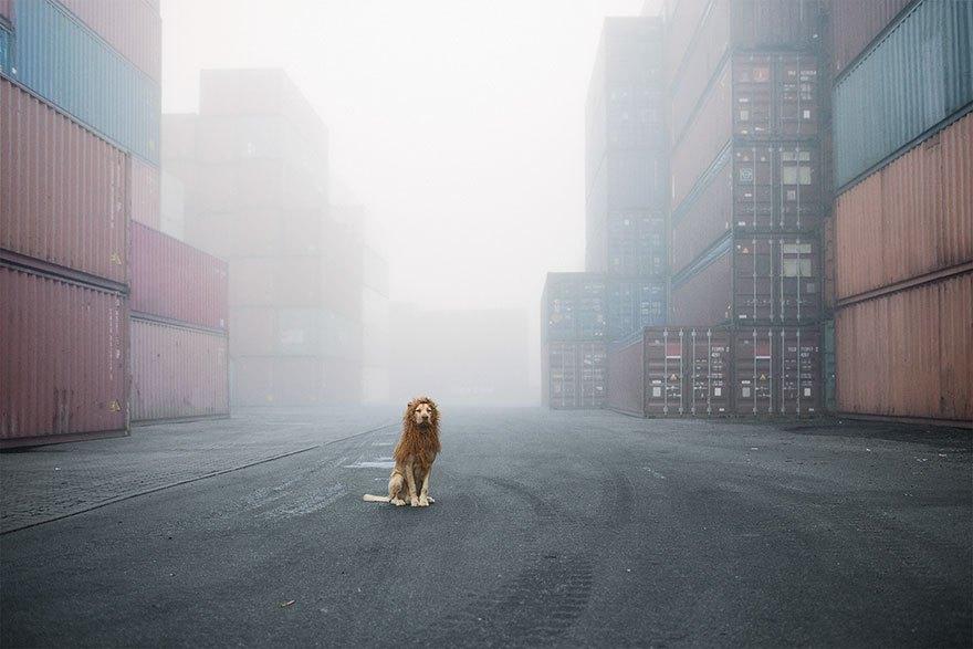 perro-abandonado-leC3B3n-de-la-ciudad-grossstadtlowe-julia-marie-werner-2