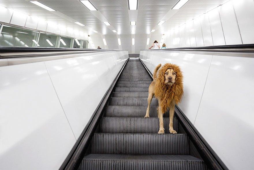 perro-abandonado-leC3B3n-de-la-ciudad-grossstadtlowe-julia-marie-werner-3