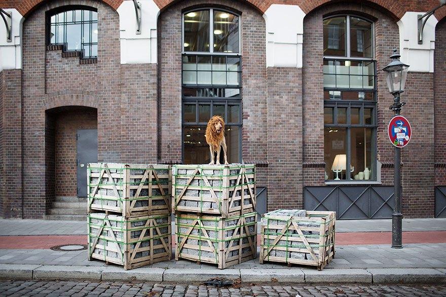 perro-abandonado-leC3B3n-de-la-ciudad-grossstadtlowe-julia-marie-werner-6