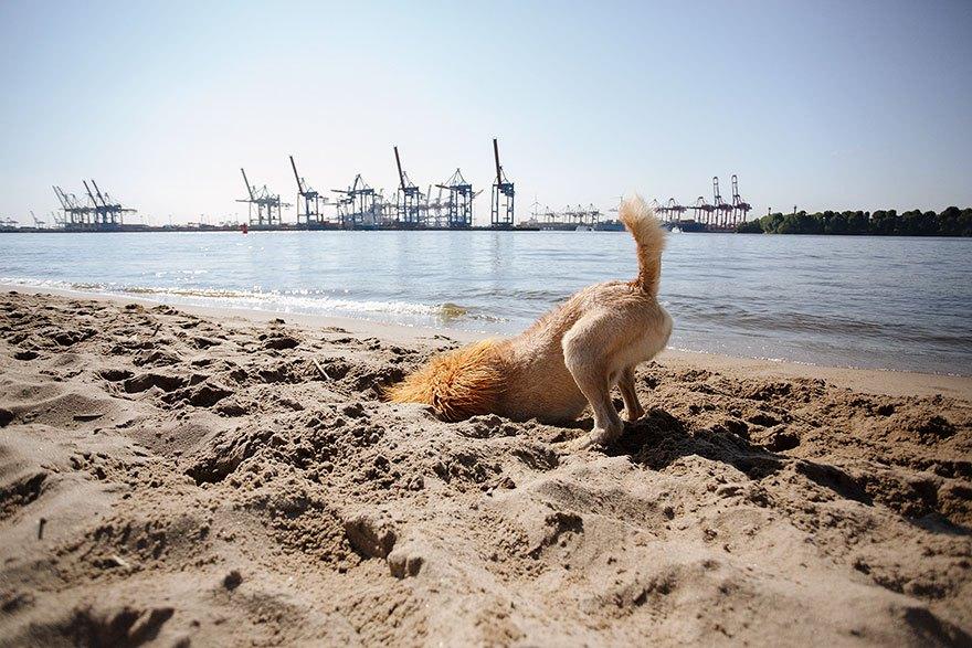 perro-abandonado-leC3B3n-de-la-ciudad-grossstadtlowe-julia-marie-werner-7
