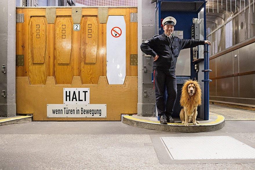perro-abandonado-leC3B3n-de-la-ciudad-grossstadtlowe-julia-marie-werner-9