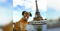 """En Francia las mascotas ya no son objetos, ahora tendrán derechos como un """"ser vivo"""""""