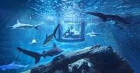 Ahora podrás vivir la experiencia de dormir toda una noche con tiburones