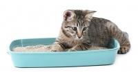 Cómo entrenar a tu gato y a ti mismo para mantener su caja de arena siempre limpia