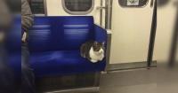 Las divertidas imágenes del gato que se sube al tren subterráneo en Tokio