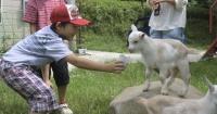 En esta granja japonesa los animales y los niños juegan libremente