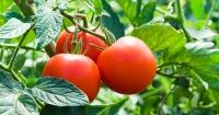 10 frutas y verduras que puedes cultivar en casa y en cualquier época del año