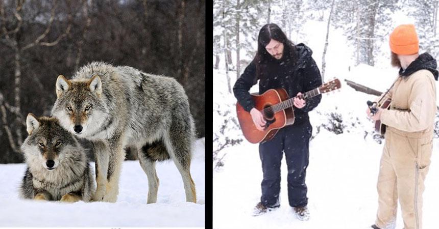 portada-lobos