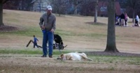 Este perro se hace el muerto para quedarse jugando en el parque y es para la risa