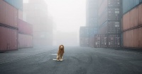 Un perro abandonado encontrado en la basura se convierte en un majestuoso león