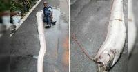 El demoníaco pez que apareció luego del terremoto de Japón