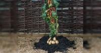 Esta increíble planta te da tomates y papas al mismo tiempo y se vende en el supermercado