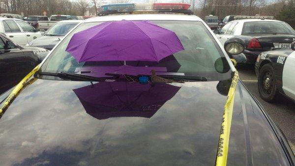 Paraguas cubre a la paloma