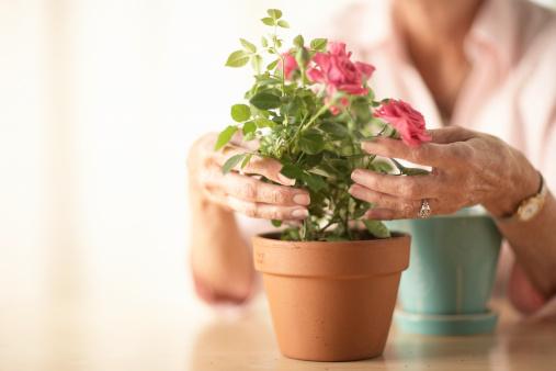 Mujer arreglando una planta