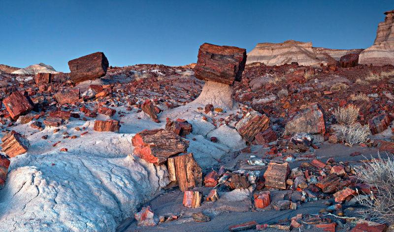 Parque Nacional Bosque Petrificado de Arizona