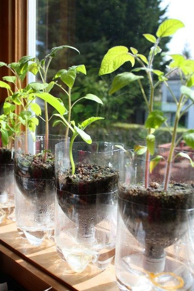 Plantas en los maceteros