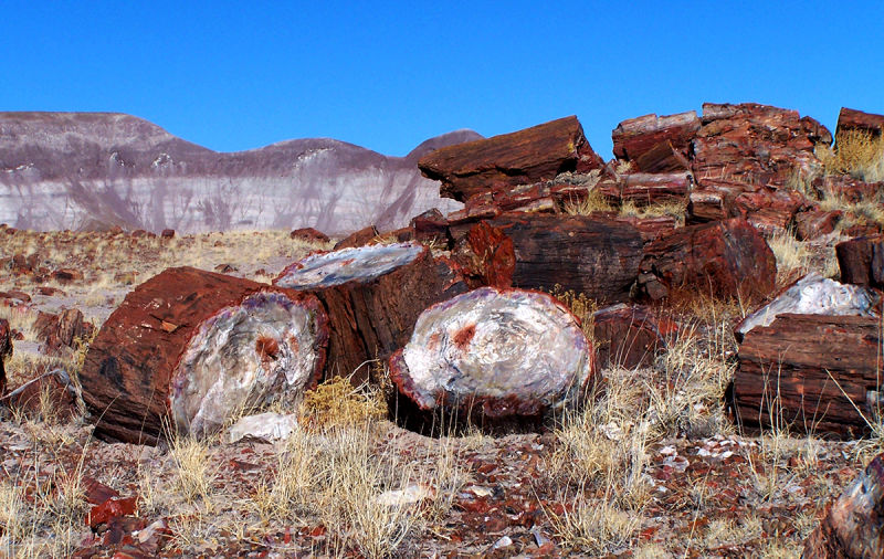 Troncos fosilizados