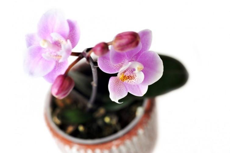 2. Orquídeas