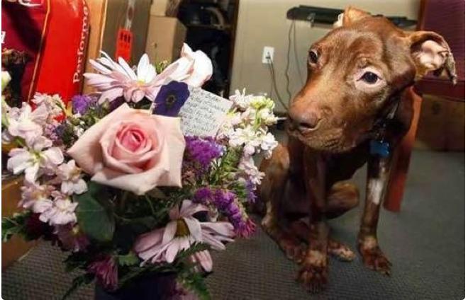 Patrick recibe flores